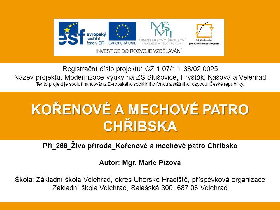 Pří_266_Živá příroda_Kořenové a mechové patro Chřibska Autor: Mgr.