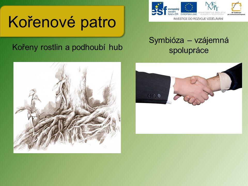 Kořenové patro Kořeny rostlin a podhoubí hub Symbióza – vzájemná spolupráce