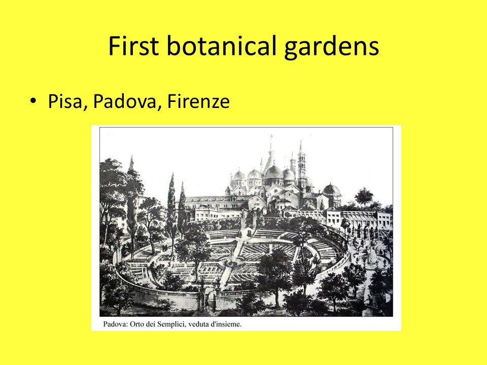 First botanical gardens Pisa, Padova, Firenze