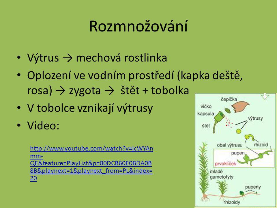 Rozmnožování Výtrus → mechová rostlinka Oplození ve vodním prostředí (kapka deště, rosa) → zygota → štět + tobolka V tobolce vznikají výtrusy Video: h