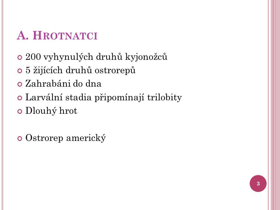 B.P AVOUKOVCI 1.