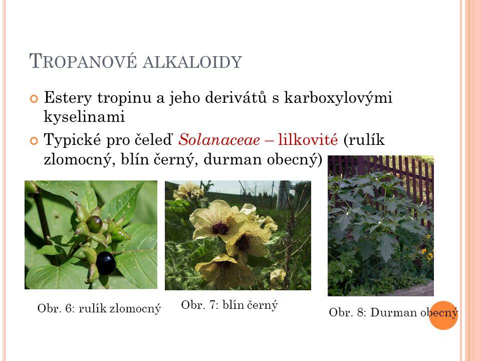 T ROPANOVÉ ALKALOIDY Estery tropinu a jeho derivátů s karboxylovými kyselinami Typické pro čeleď Solanaceae – lilkovité (rulík zlomocný, blín černý, d