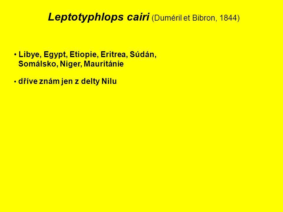 Leptotyphlops cairi (Duméril et Bibron, 1844) Libye, Egypt, Etiopie, Eritrea, Súdán, Somálsko, Niger, Mauritánie dříve znám jen z delty Nilu