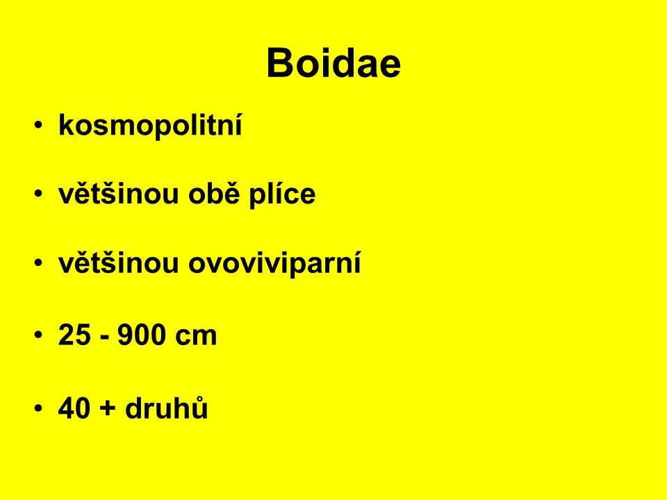 Boidae kosmopolitní 25 - 900 cm většinou obě plíce 40 + druhů většinou ovoviviparní