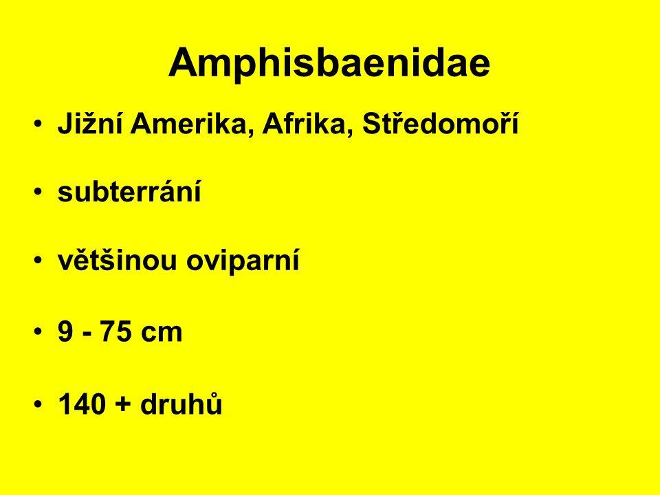Amphisbaenidae Jižní Amerika, Afrika, Středomoří 9 - 75 cm subterrání 140 + druhů většinou oviparní