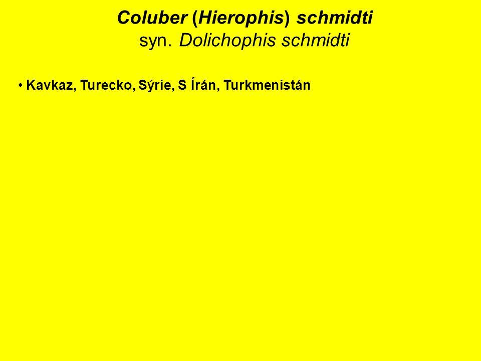 Coluber (Hierophis) schmidti syn. Dolichophis schmidti Kavkaz, Turecko, Sýrie, S Írán, Turkmenistán