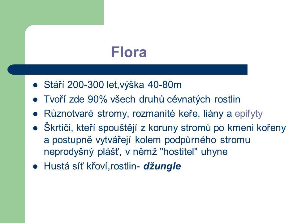 Flora Stáří 200-300 let,výška 40-80m Tvoří zde 90% všech druhů cévnatých rostlin Různotvaré stromy, rozmanité keře, liány a epifyty Škrtiči, kteří spo