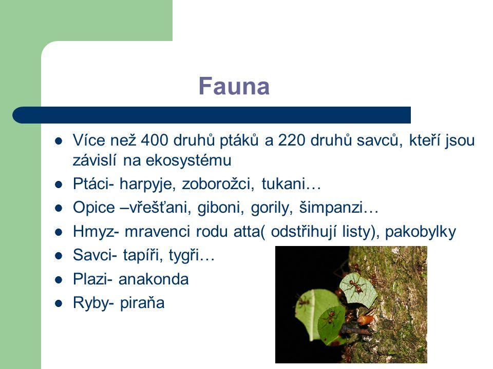 Fauna Více než 400 druhů ptáků a 220 druhů savců, kteří jsou závislí na ekosystému Ptáci- harpyje, zoborožci, tukani… Opice –vřešťani, giboni, gorily,