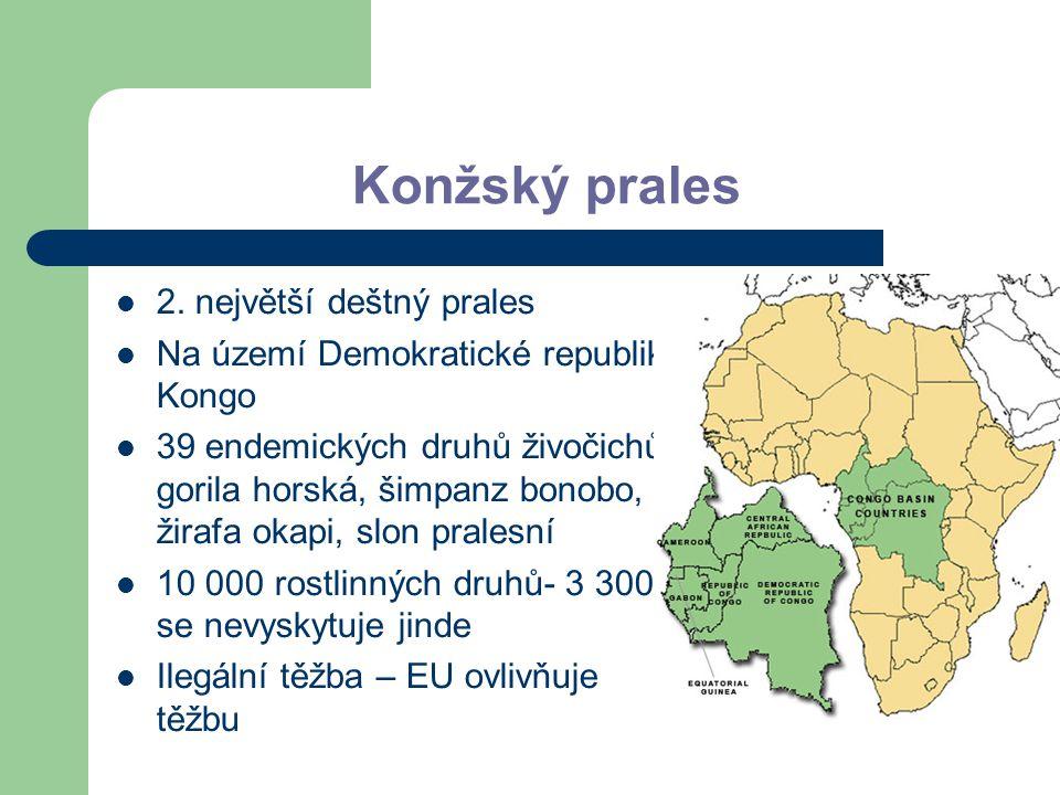 Konžský prales 2. největší deštný prales Na území Demokratické republiky Kongo 39 endemických druhů živočichů- gorila horská, šimpanz bonobo, žirafa o