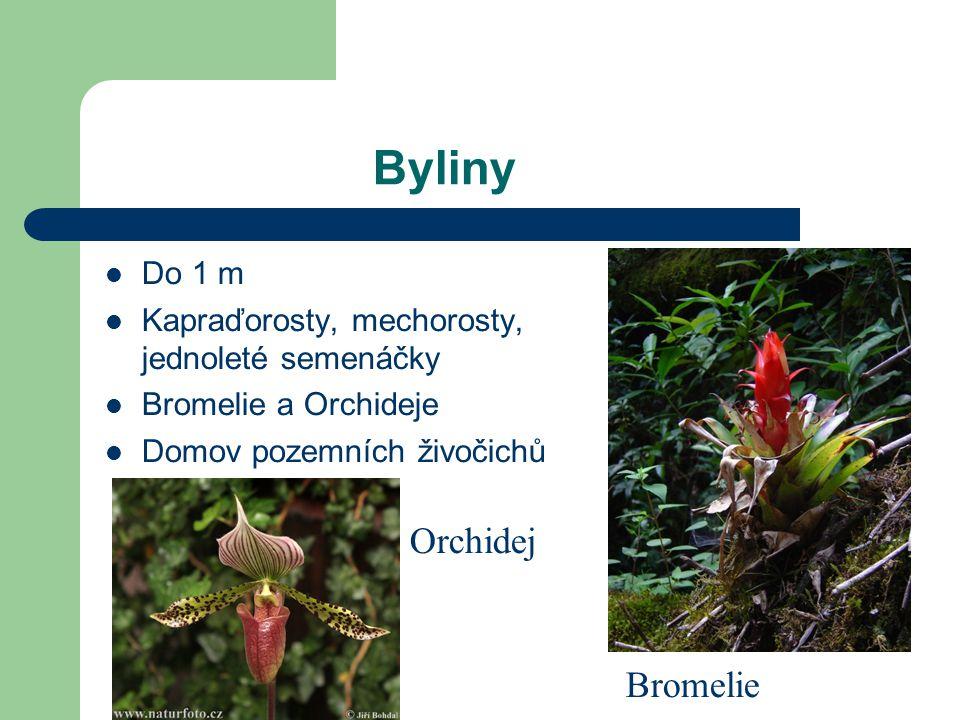 Byliny Do 1 m Kapraďorosty, mechorosty, jednoleté semenáčky Bromelie a Orchideje Domov pozemních živočichů Bromelie Orchidej