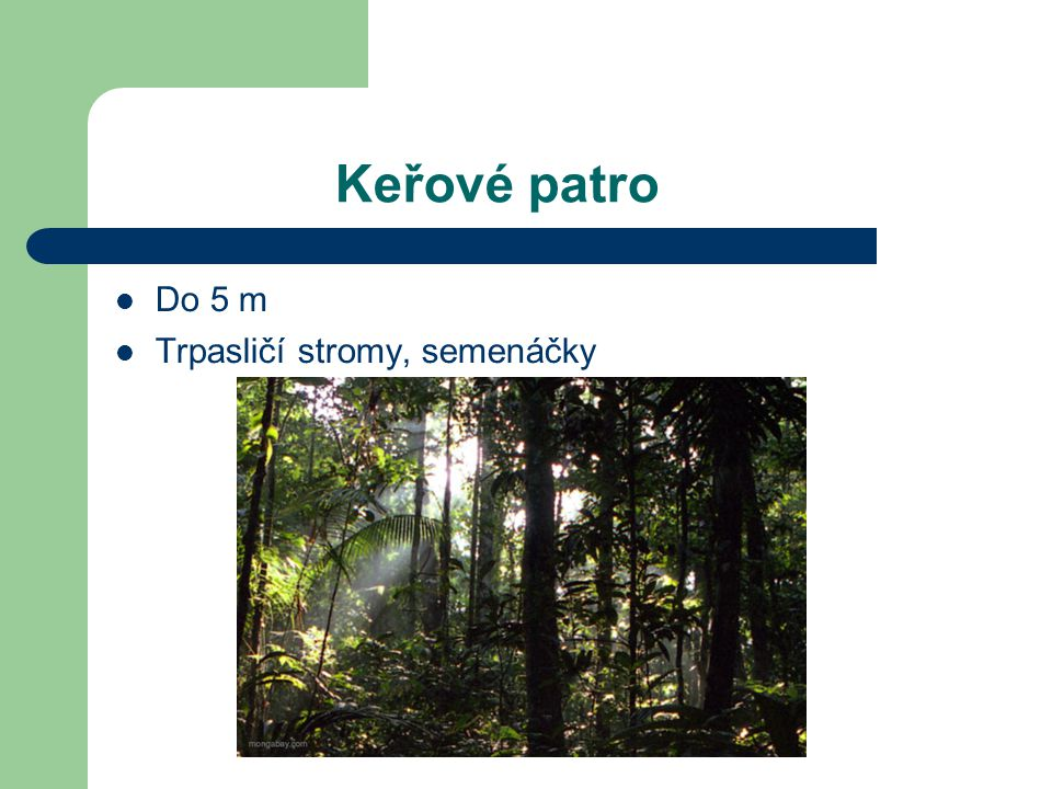 Spodní stromové patro Mezi 10m a 20m Mladší exempláře vyšších stromů Druhy stromů, které snášejí stín Hmyz, ptáci
