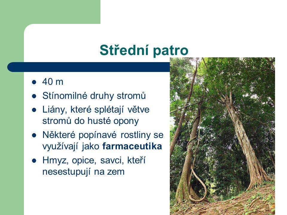 Střední patro 40 m Stínomilné druhy stromů Liány, které splétají větve stromů do husté opony Některé popínavé rostliny se využívají jako farmaceutika