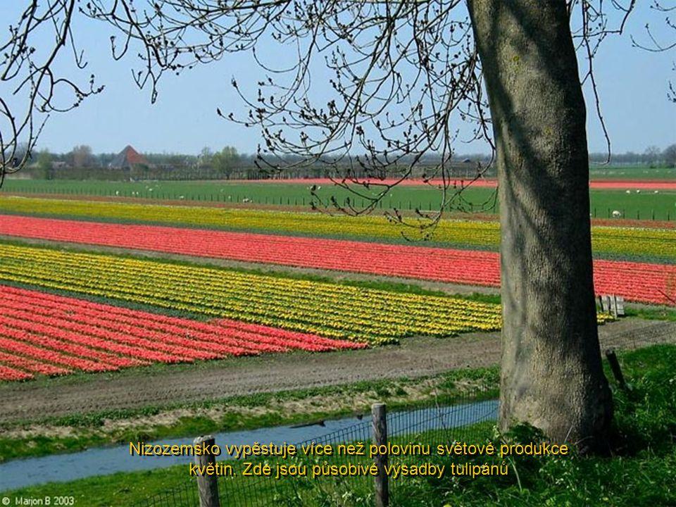 Amsterdam je městem tulipánů, které kvetou v dubnu, město dřeváků, diamantů a porcelánu
