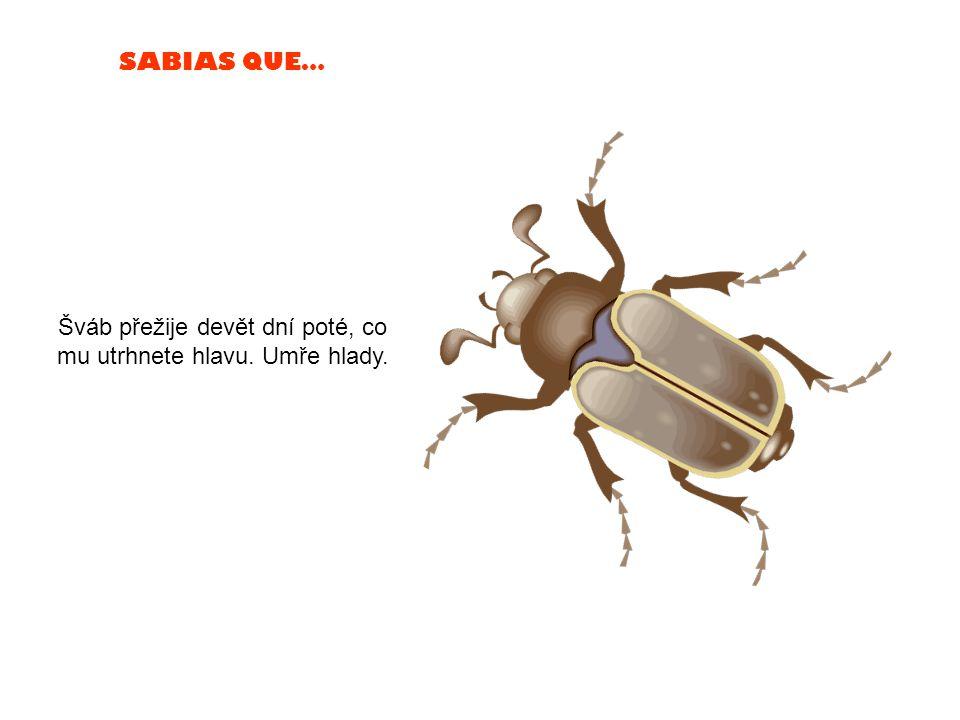 SABIAS QUE… Motýli mají smysl chuti v nohou