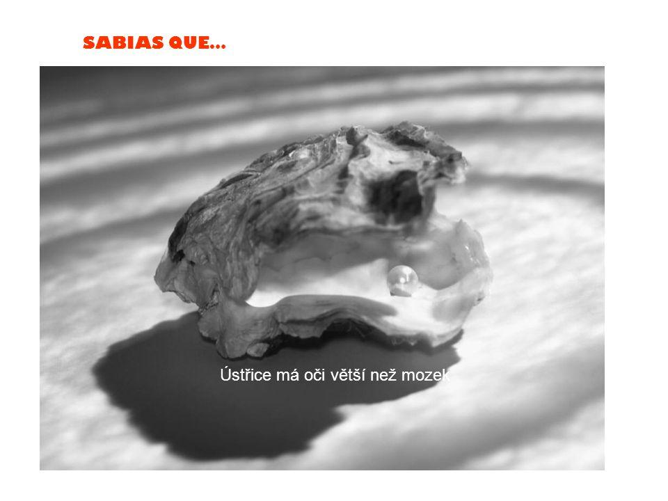 SABIAS QUE… Šváb přežije devět dní poté, co mu utrhnete hlavu. Umře hlady.