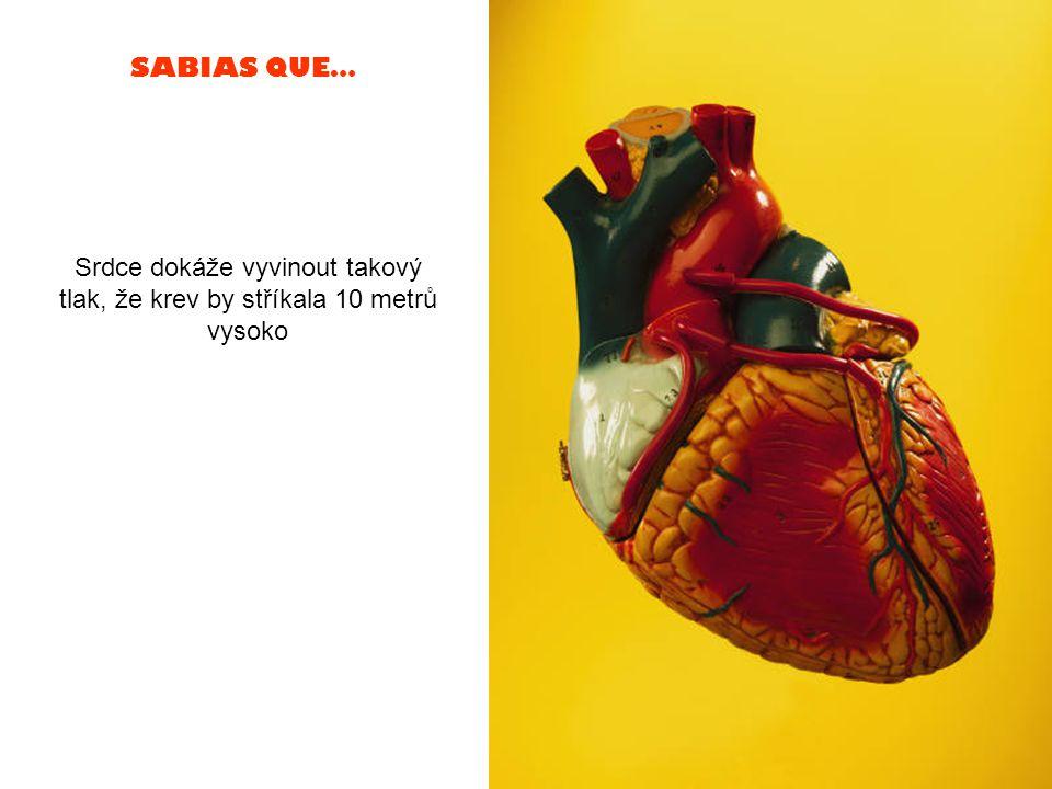 SABIAS QUE… Srdce dokáže vyvinout takový tlak, že krev by stříkala 10 metrů vysoko