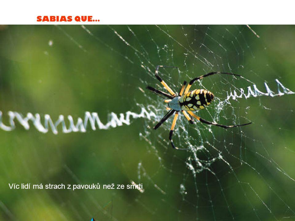 SABIAS QUE… Víc lidí má strach z pavouků než ze smrti