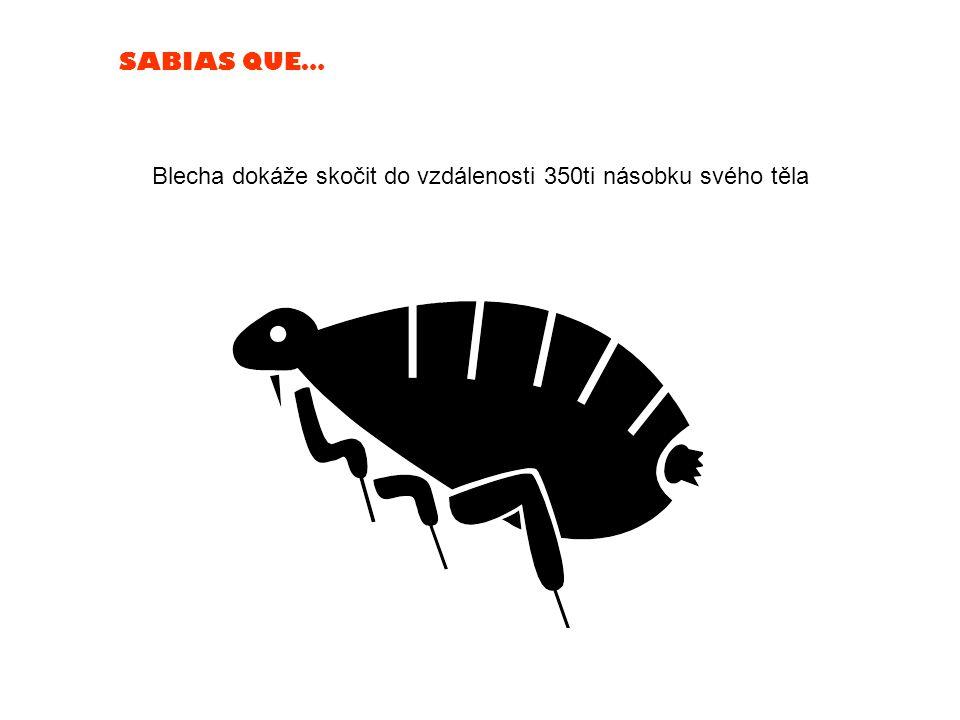 SABIAS QUE… Blecha dokáže skočit do vzdálenosti 350ti násobku svého těla