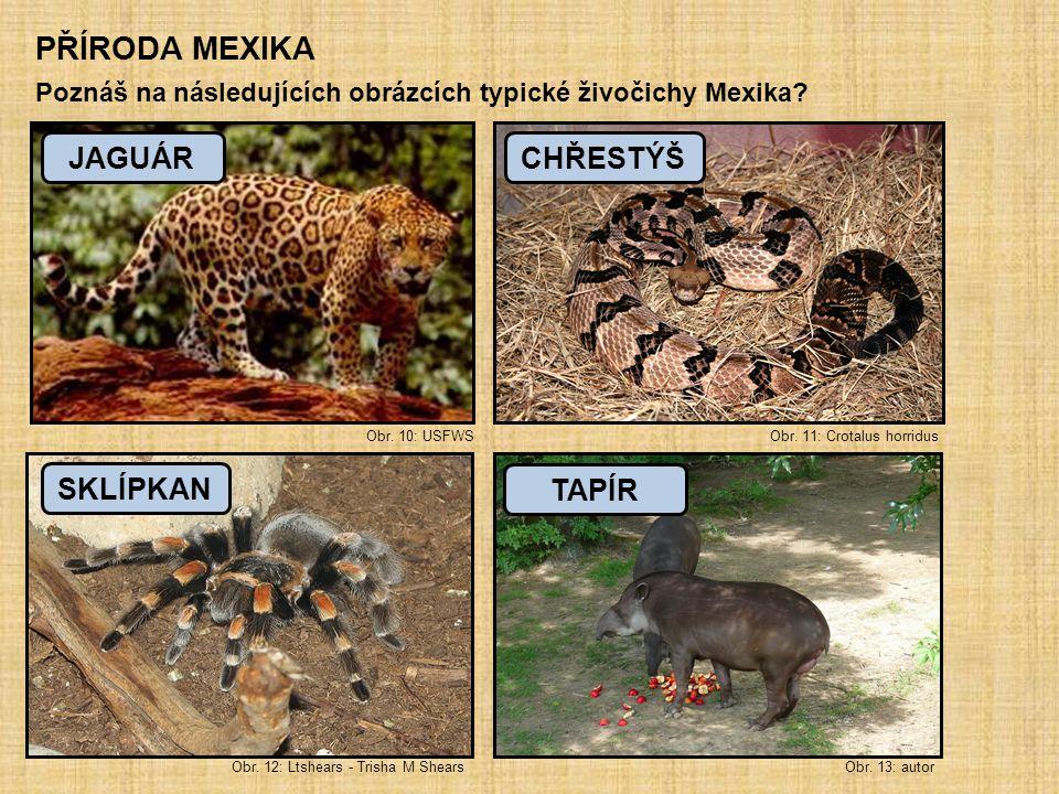 PŘÍRODA MEXIKA Poznáš na následujících obrázcích typické živočichy Mexika? Obr. 10: USFWS Obr. 11: Crotalus horridus JAGUÁRCHŘESTÝŠ Obr. 12: Ltshears