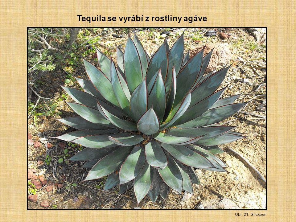 Obr. 21: Stickpen Tequila se vyrábí z rostliny agáve