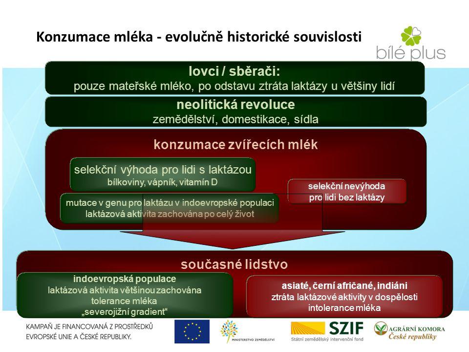 lovci / sběrači: pouze mateřské mléko, po odstavu ztráta laktázy u většiny lidí neolitická revoluce zemědělství, domestikace, sídla konzumace zvířecíc