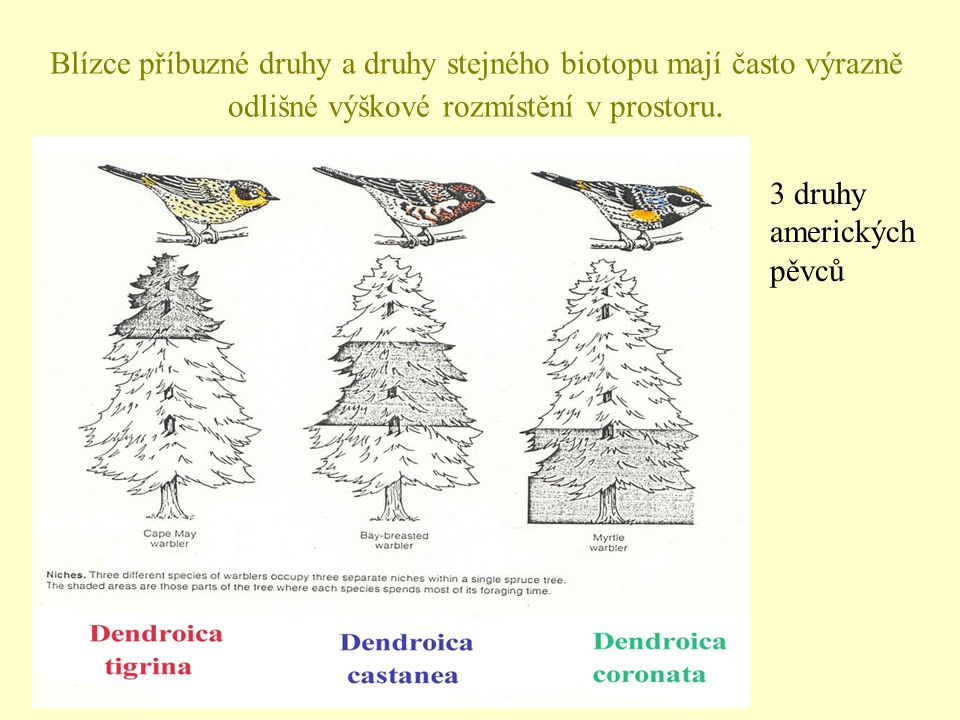 Blízce příbuzné druhy a druhy stejného biotopu mají často výrazně odlišné výškové rozmístění v prostoru. 3 druhy amerických pěvců