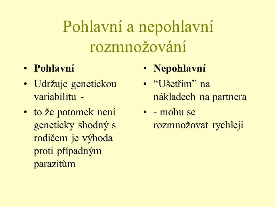 Pohlavní a nepohlavní rozmnožování Pohlavní Udržuje genetickou variabilitu - to že potomek není geneticky shodný s rodičem je výhoda proti případným p
