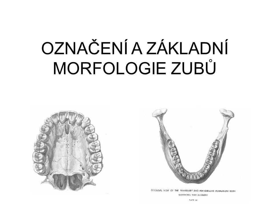 OZNAČENÍ ZUBŮ Máme více možností: Počáteční písmeno Řezáky – dentes incisivi I 1, I 2 Špičák – dens caninus C Třenové zuby – dentes premolares P 1, P 2 Stoličky – dentes molares M 1, M 2, M 3