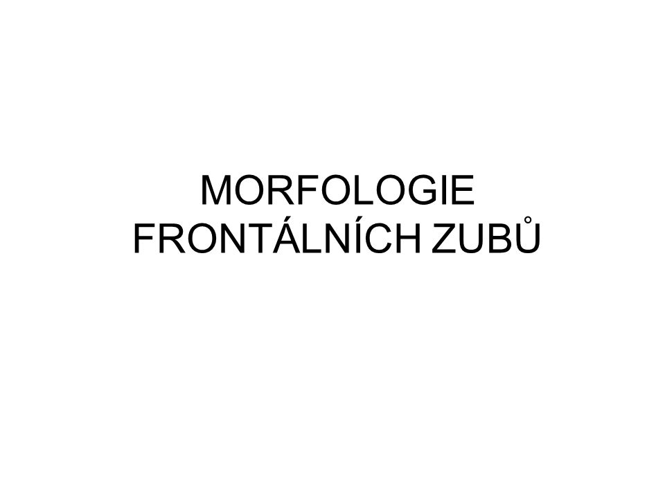 MORFOLOGIE FRONTÁLNÍCH ZUBŮ