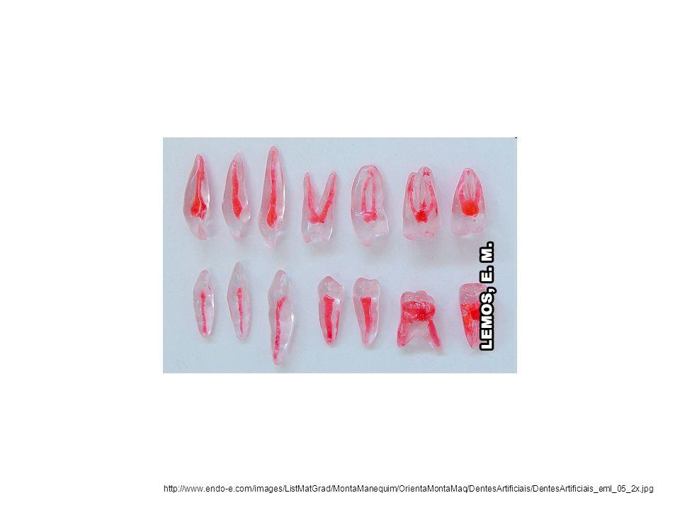 http://www.endo-e.com/images/ListMatGrad/MontaManequim/OrientaMontaMaq/DentesArtificiais/DentesArtificiais_eml_05_2x.jpg