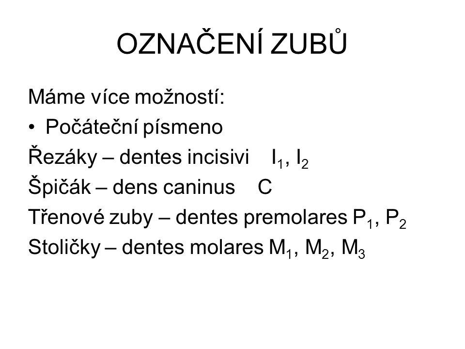 OZNAČENÍ ZUBŮ Máme více možností: Počáteční písmeno Řezáky – dentes incisivi I 1, I 2 Špičák – dens caninus C Třenové zuby – dentes premolares P 1, P
