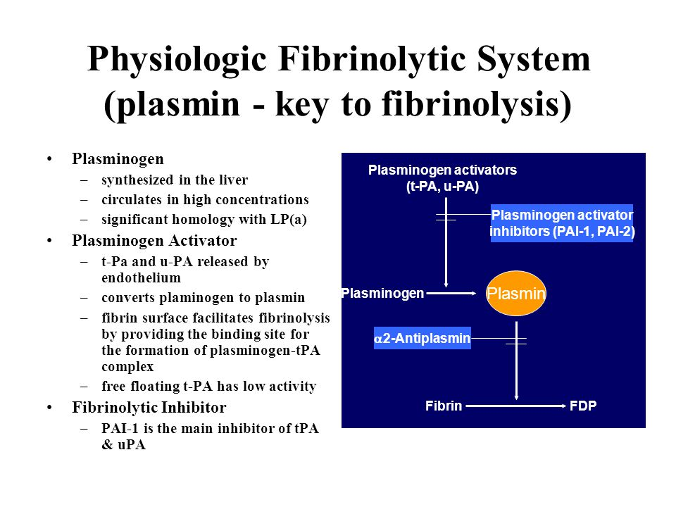 Physiologic Fibrinolytic System (plasmin - key to fibrinolysis) Plasminogen –synthesized in the liver –circulates in high concentrations –significant