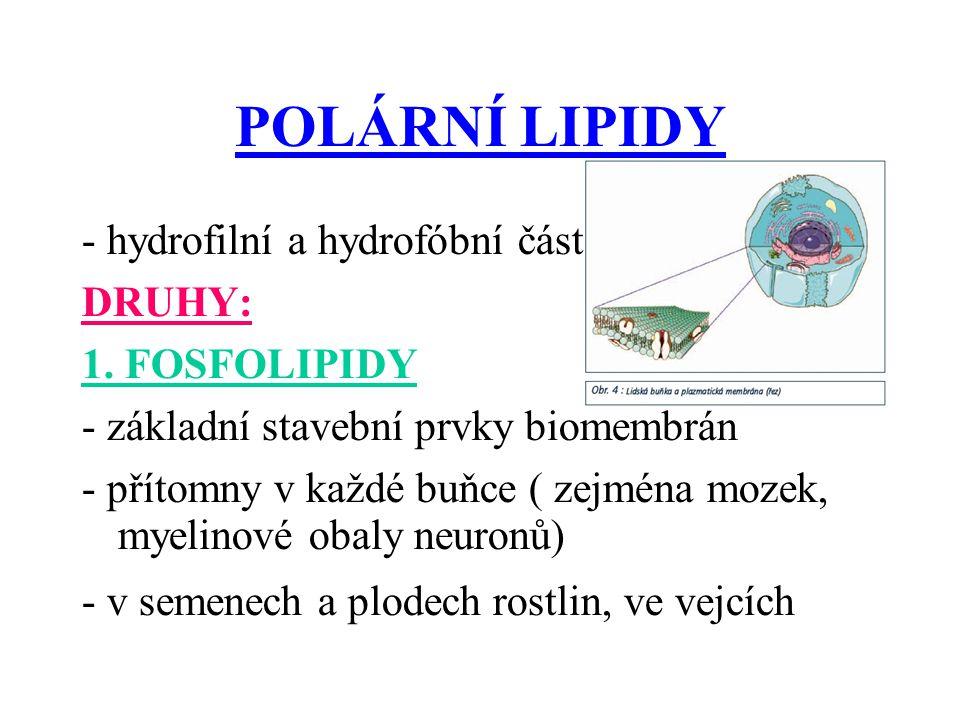 POLÁRNÍ LIPIDY - hydrofilní a hydrofóbní část DRUHY: 1.