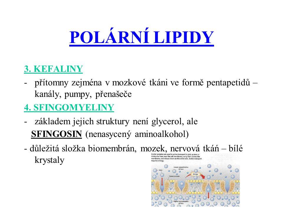 POLÁRNÍ LIPIDY 3.