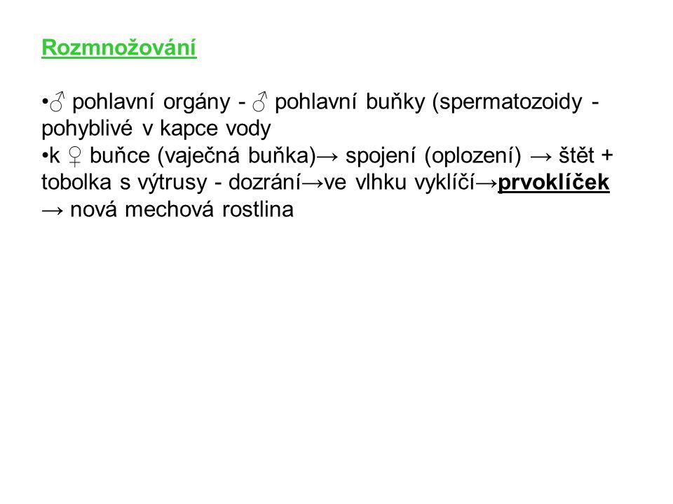 Rozmnožování ♂ pohlavní orgány - ♂ pohlavní buňky (spermatozoidy - pohyblivé v kapce vody k ♀ buňce (vaječná buňka)→ spojení (oplození) → štět + tobol