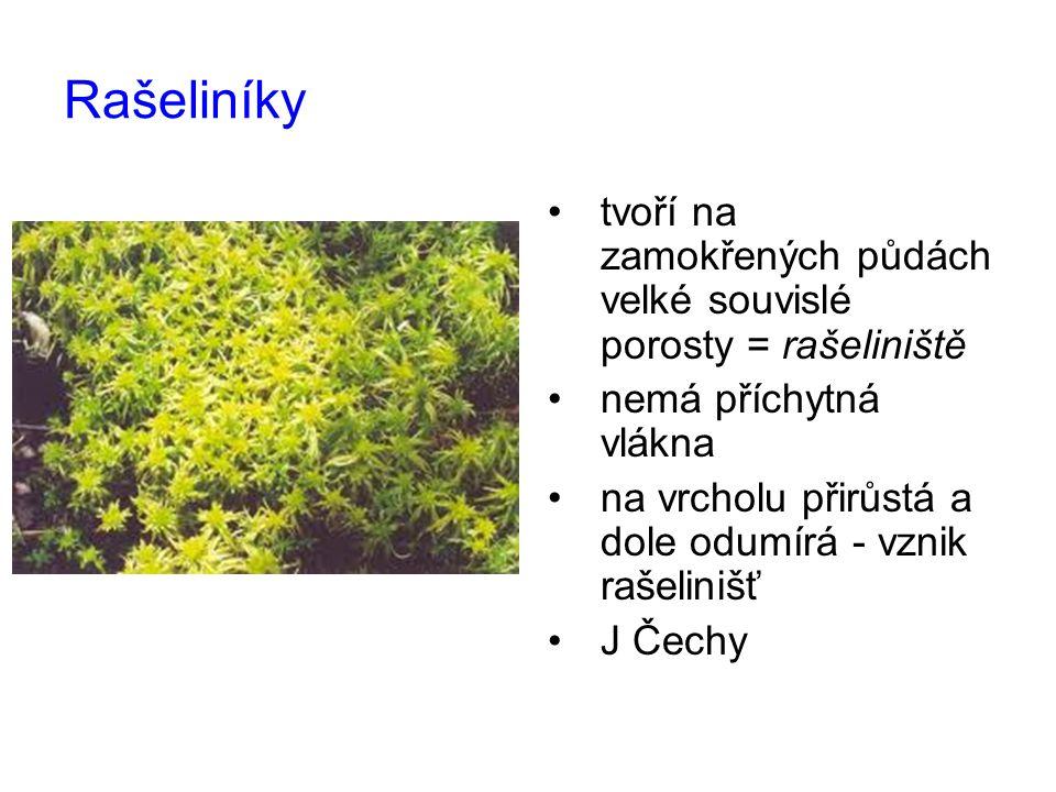 Rašeliníky tvoří na zamokřených půdách velké souvislé porosty = rašeliniště nemá příchytná vlákna na vrcholu přirůstá a dole odumírá - vznik rašeliniš