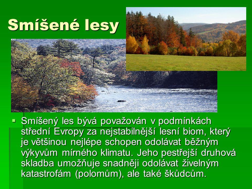 Jehličnaté lesy  Jehličnatý les je druh lesa, ve kterém převládají jehličnany.