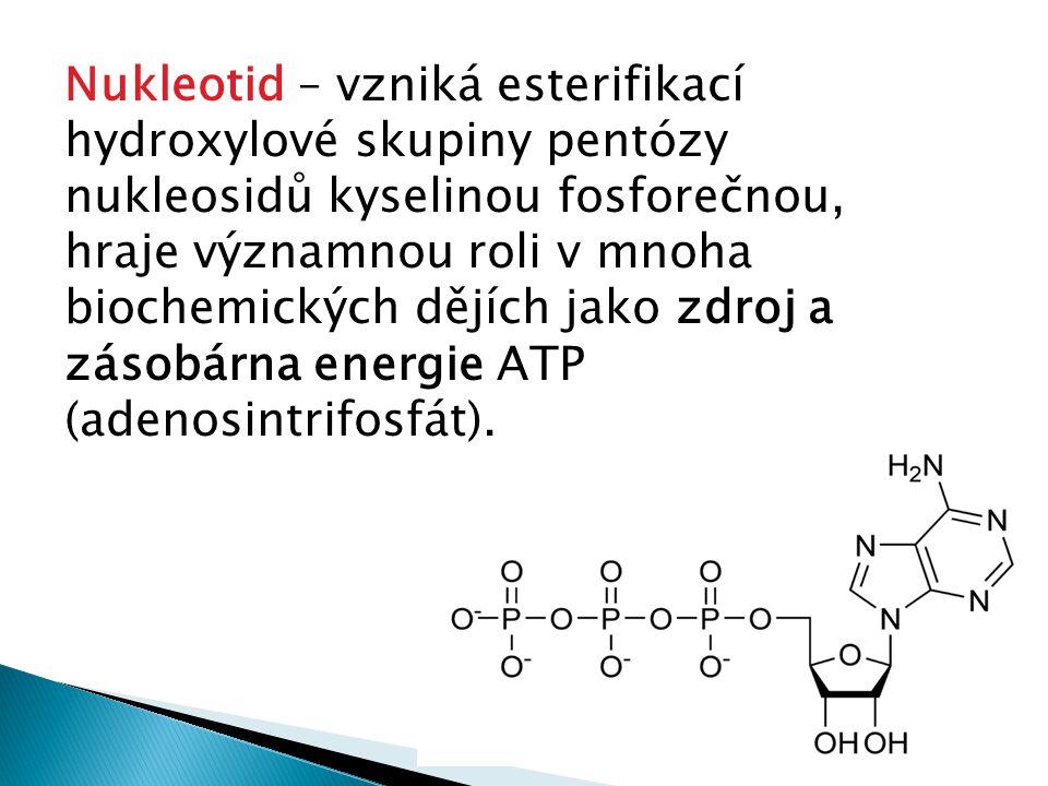 Nukleotid – vzniká esterifikací hydroxylové skupiny pentózy nukleosidů kyselinou fosforečnou, hraje významnou roli v mnoha biochemických dějích jako z