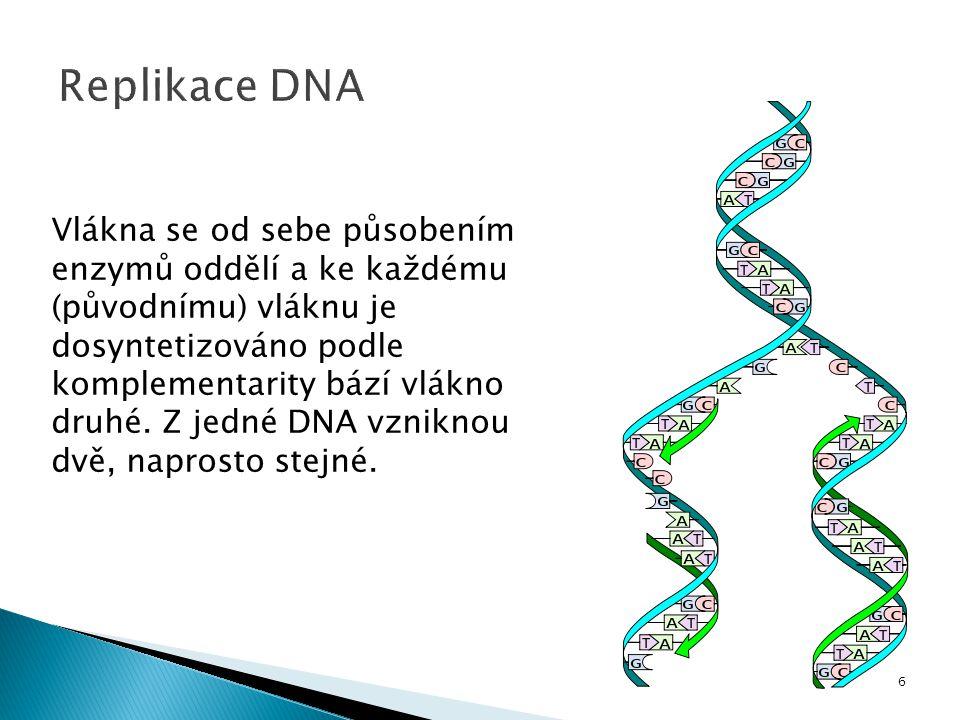 Vlákna se od sebe působením enzymů oddělí a ke každému (původnímu) vláknu je dosyntetizováno podle komplementarity bází vlákno druhé. Z jedné DNA vzni