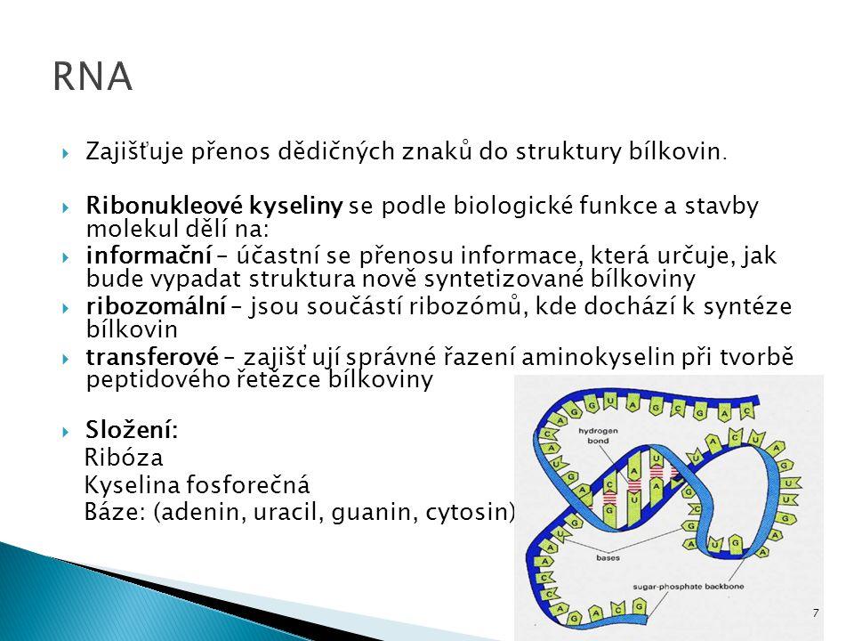  Zajiš ť uje přenos dědičných znaků do struktury bílkovin.  Ribonukleové kyseliny se podle biologické funkce a stavby molekul dělí na:  informační