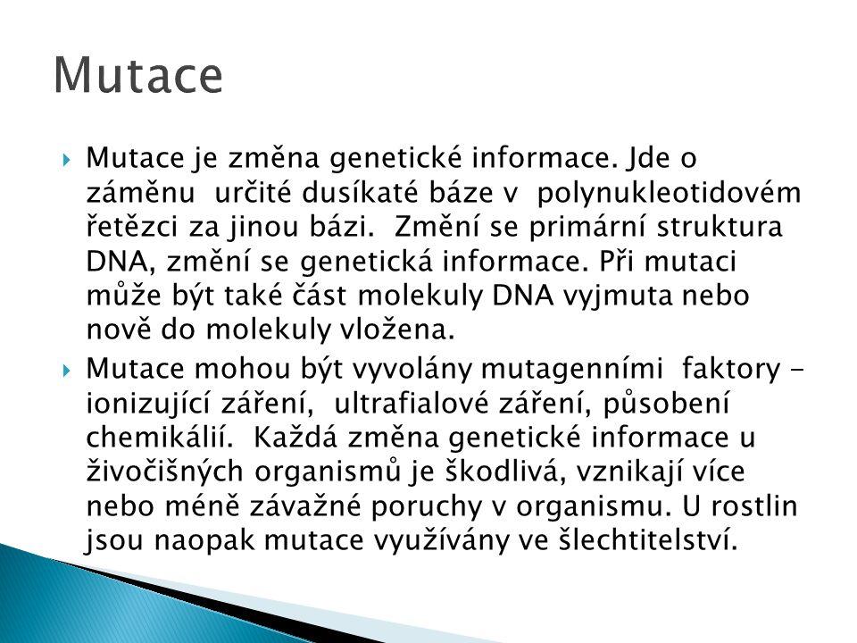  Mutace je změna genetické informace. Jde o záměnu určité dusíkaté báze v polynukleotidovém řetězci za jinou bázi. Změní se primární struktura DNA, z