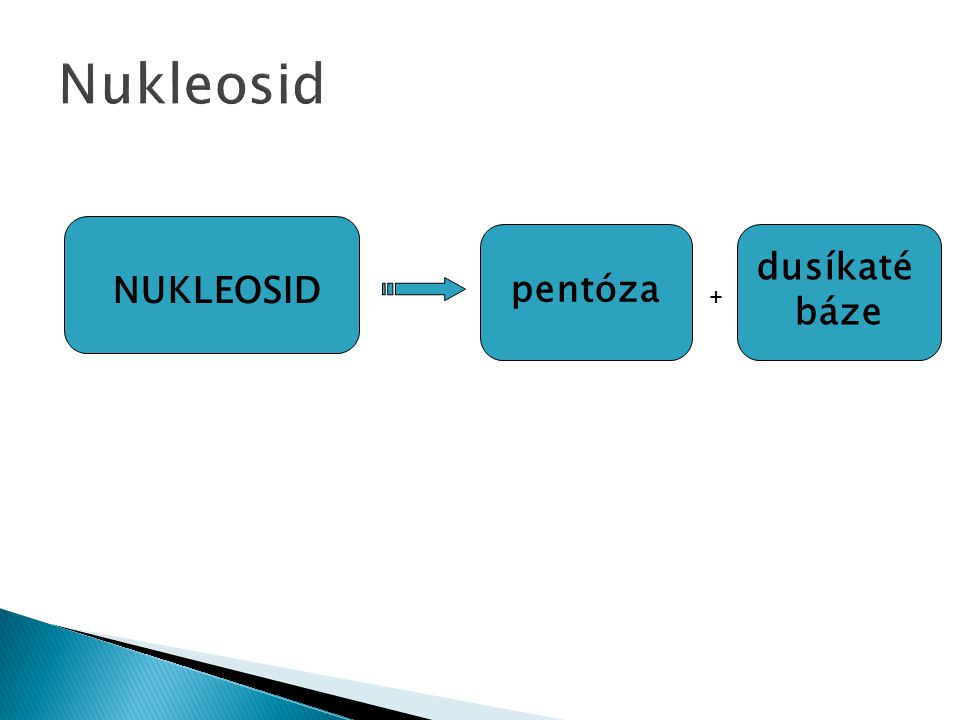  Cukerná složka – pentóza  DNA – 2-deoxy-D-ribóza  RNA – D-ribóza