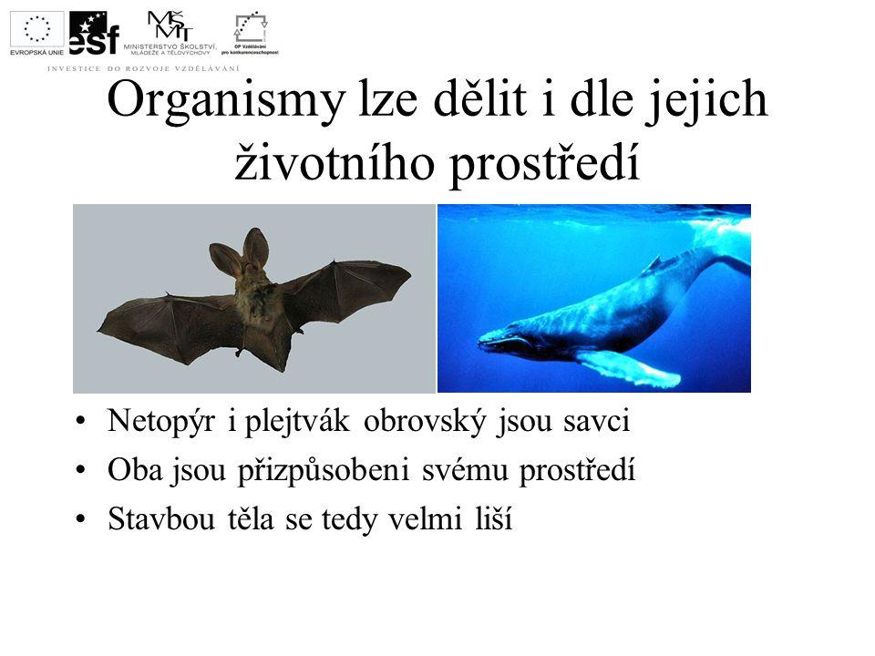 Organismy lze dělit i dle jejich životního prostředí Netopýr i plejtvák obrovský jsou savci Oba jsou přizpůsobeni svému prostředí Stavbou těla se tedy