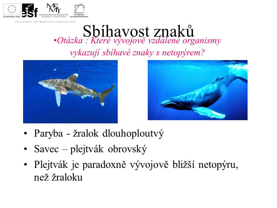 Sbíhavost znaků Paryba - žralok dlouhoploutvý Savec – plejtvák obrovský Plejtvák je paradoxně vývojově bližší netopýru, než žraloku Otázka : Které výv