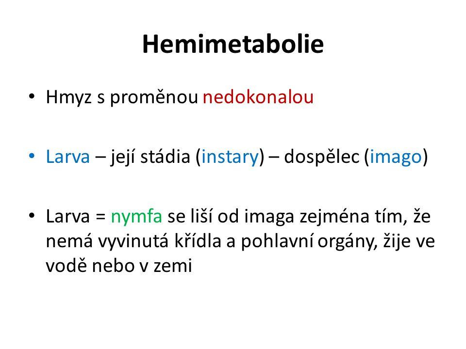 Hemimetabolie Hmyz s proměnou nedokonalou Larva – její stádia (instary) – dospělec (imago) Larva = nymfa se liší od imaga zejména tím, že nemá vyvinut