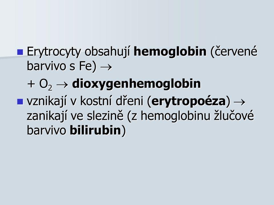 Erytrocyty obsahují hemoglobin (červené barvivo s Fe)  Erytrocyty obsahují hemoglobin (červené barvivo s Fe)  + O 2  dioxygenhemoglobin vznikají v