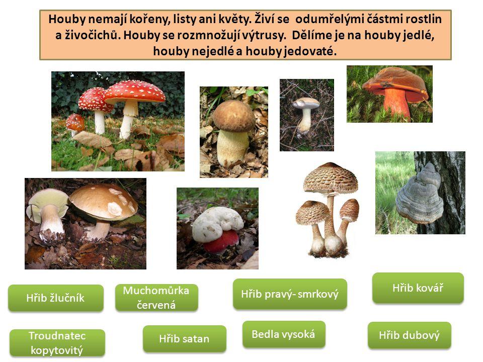 Houby nemají kořeny, listy ani květy. Živí se odumřelými částmi rostlin a živočichů. Houby se rozmnožují výtrusy. Dělíme je na houby jedlé, houby neje
