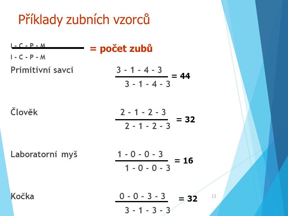 Příklady zubních vzorců I - C - P - M Primitivní savci 3 - 1 - 4 - 3 3 - 1 - 4 - 3 Člověk 2 - 1 - 2 - 3 2 - 1 - 2 - 3 Laboratorní myš 1 - 0 - 0 - 3 1