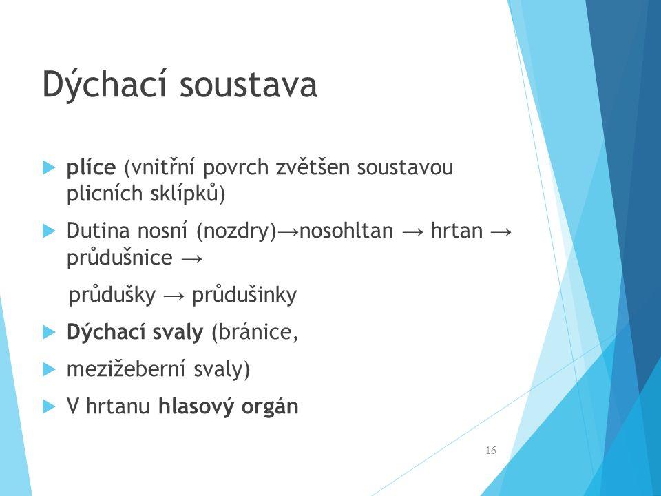 Dýchací soustava  plíce (vnitřní povrch zvětšen soustavou plicních sklípků)  Dutina nosní (nozdry) → nosohltan → hrtan → průdušnice → průdušky → prů
