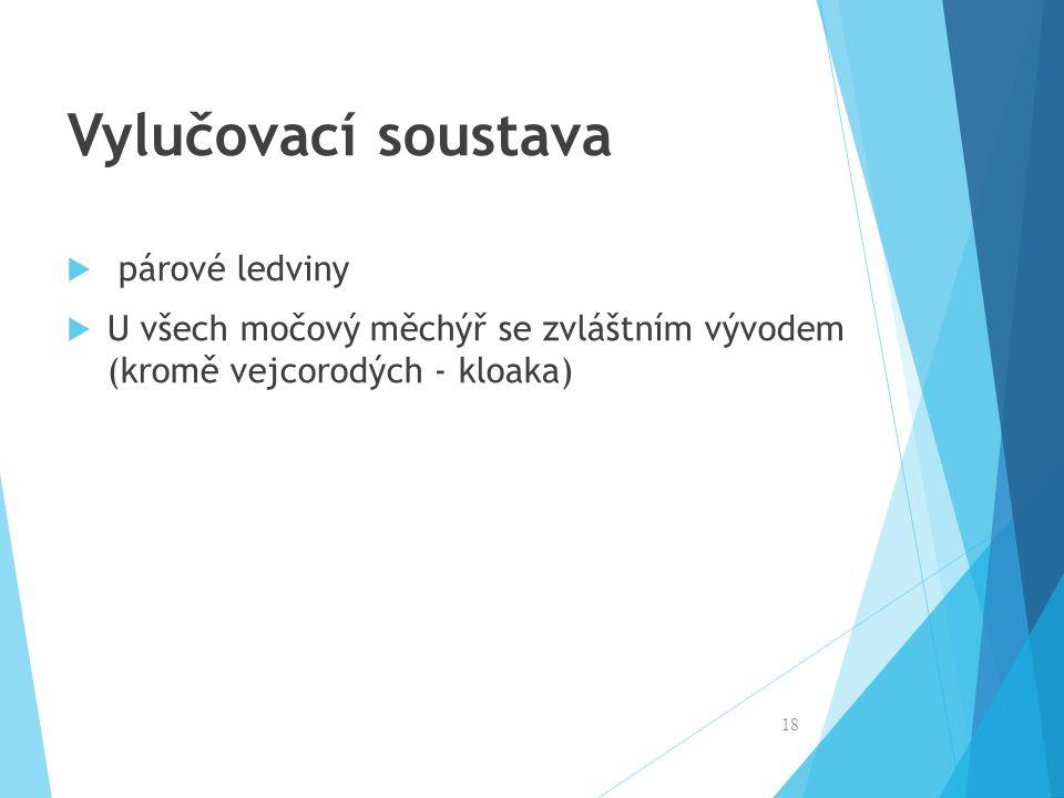 Vylučovací soustava  párové ledviny  U všech močový měchýř se zvláštním vývodem (kromě vejcorodých - kloaka) 18